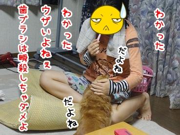 kinako705.jpg
