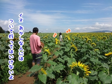 kinako711.jpg