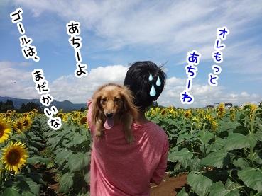 kinako712.jpg