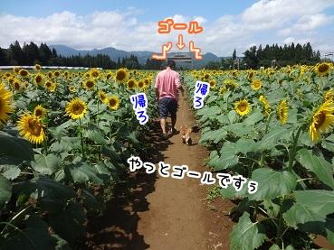 kinako713.jpg