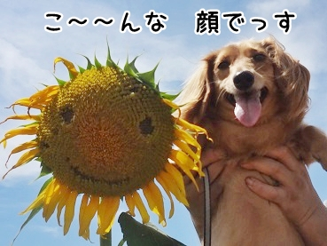 kinako714.jpg