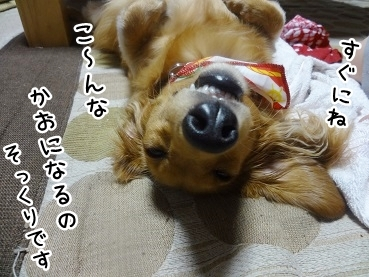 kinako729.jpg