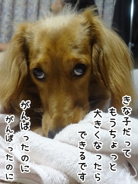 kinako737.jpg