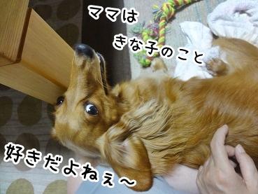 kinako750.jpg