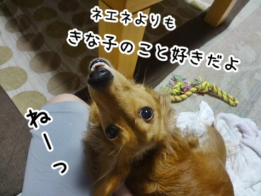 kinako751.jpg
