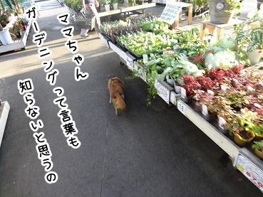 kinako757.jpg