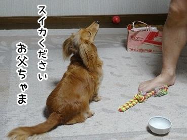 kinako761.jpg