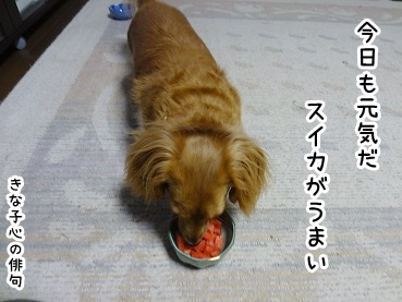 kinako765.jpg