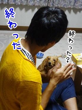 kinako774.jpg