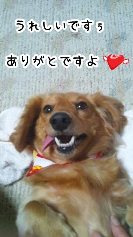 kinako786.jpg
