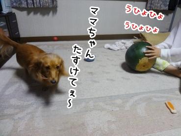 kinako801.jpg