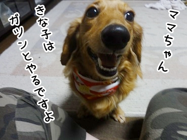 kinako806.jpg