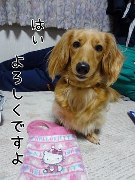 kinako82.jpg