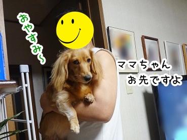 kinako822.jpg