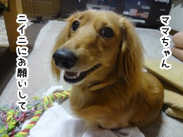 kinako823.jpg