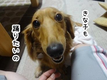 kinako824.jpg