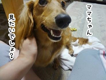 kinako825.jpg