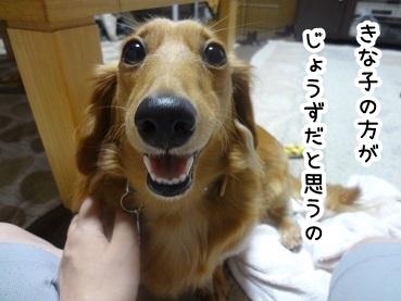 kinako826.jpg
