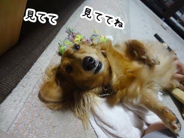 kinako827.jpg