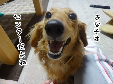 kinako830.jpg