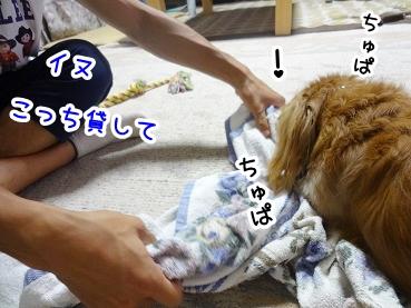 kinako831.jpg
