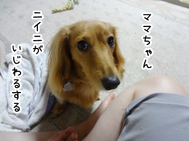 kinako834.jpg