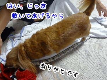 kinako835.jpg