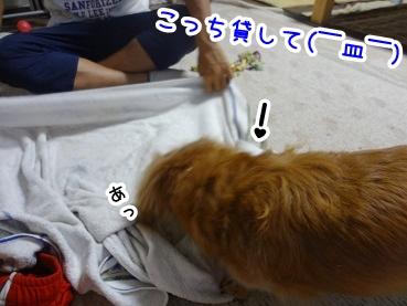 kinako836.jpg