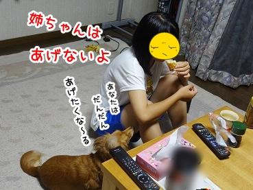 kinako847.jpg