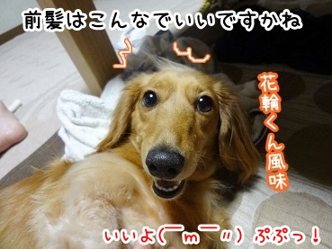 kinako853.jpg