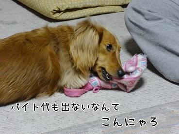 kinako86.jpg