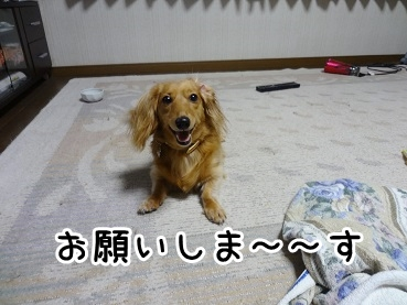 kinako860.jpg
