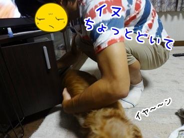 kinako861.jpg