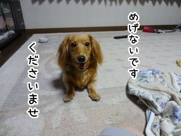 kinako862.jpg