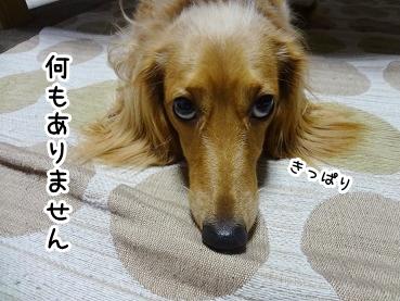 kinako869.jpg