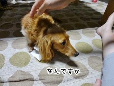 kinako870.jpg