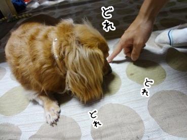 kinako871.jpg