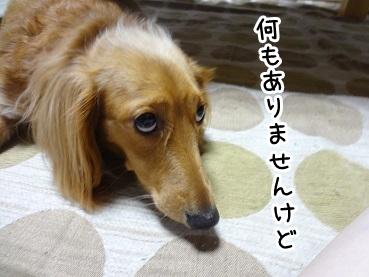 kinako872.jpg