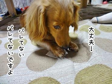 kinako874.jpg