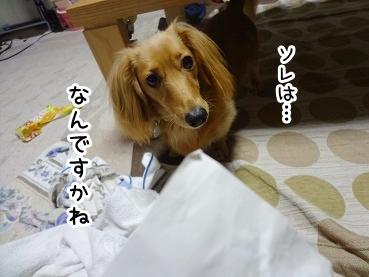 kinako878.jpg