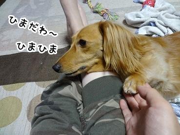 kinako881.jpg