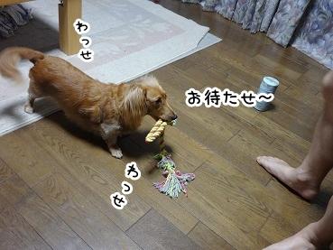 kinako884.jpg