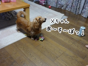 kinako885.jpg