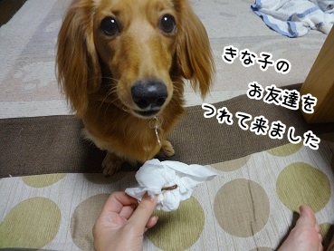 kinako889.jpg