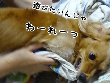 kinako890.jpg