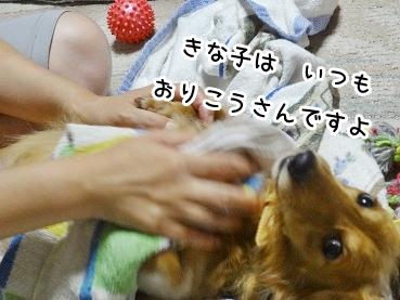kinako892.jpg