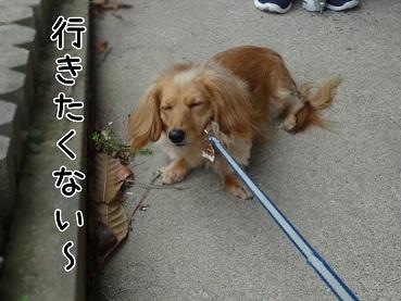 kinako9.jpg