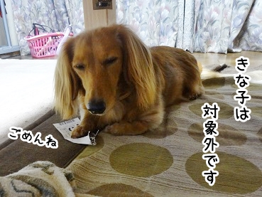kinako901.jpg