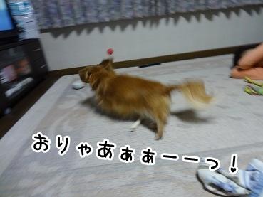 kinako908.jpg