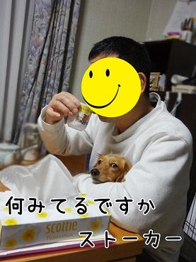 kinako91.jpg